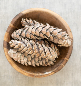 Bag of Strobus Pine Cones - Danshire Market and Design