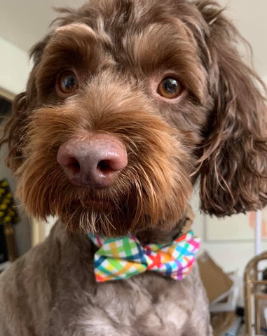 Penny Lou UK | Funky Dog Collars, Leads and Accessories - How it all began, Dog Model
