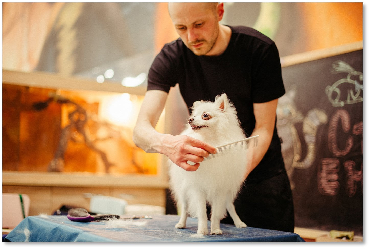Penny Lou UK Blog   Bond With Your Dog - Man grooming a white dog