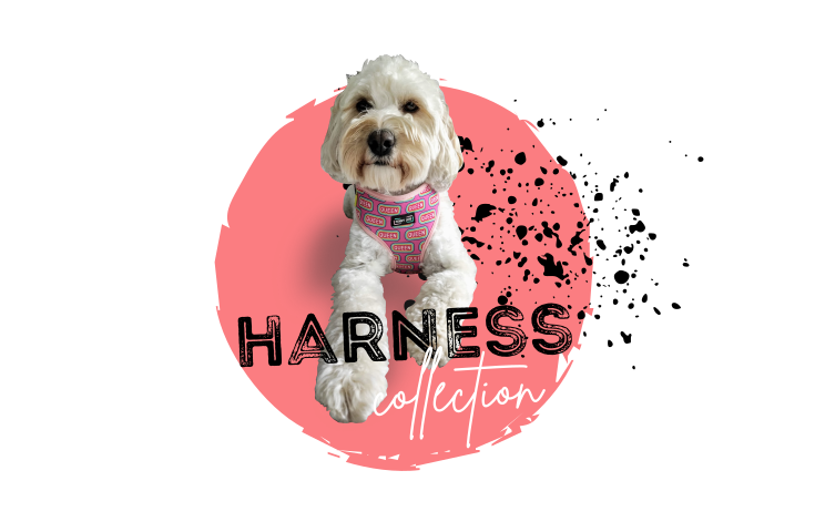 Penny Lou UK - Funky Dog Collars, Leads and Accessories | Harness Collection