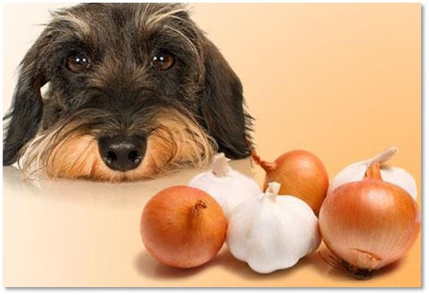 Toxic Food for your Dog Pic 2: The Penny Lou Blog - Penny Lou UK   Funky Dog Collars, Leads and Accessories