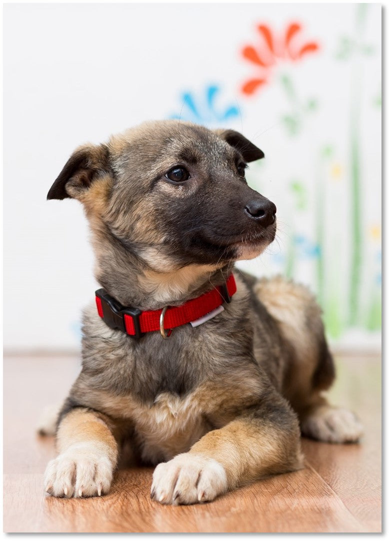 How to introduce your puppy to a collar – My Puppy hates his collar   Penny Lou Blog – Funky Collars, Leads and Accessories