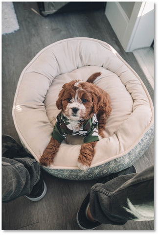 Penny Lou UK | Funky Dog Collars, Leads and Accessories for Pups with Personality - Blog: I'm getting a new puppy, what do I need?