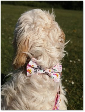 Penny Lou UK | Funky Dog Collars, Leads and Accessories for pups with personality - Blog, I'm getting a new puppy, what do I need? Pic 5