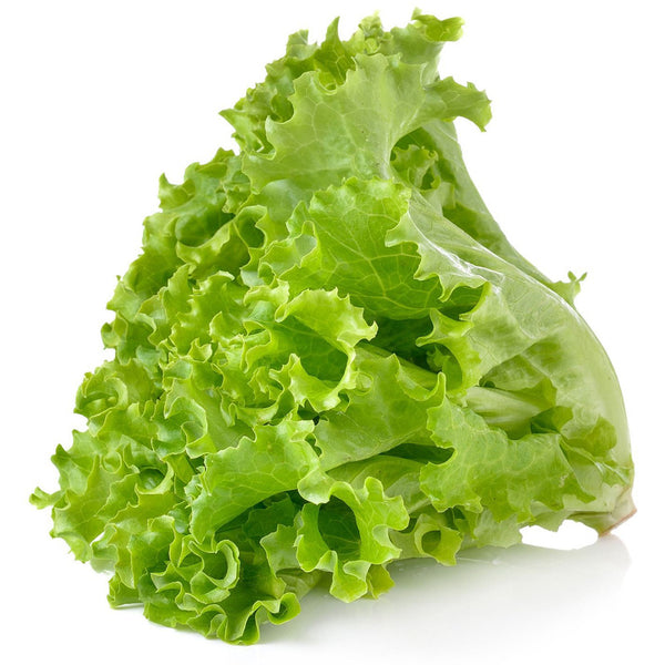 Lettuce green leaf (4769198014601)
