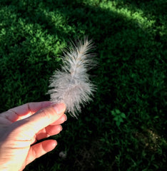 Angel Feather Christine Alexandria/Angel Chatter