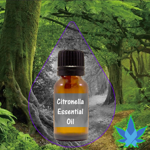 Citronella essential oil 10ml