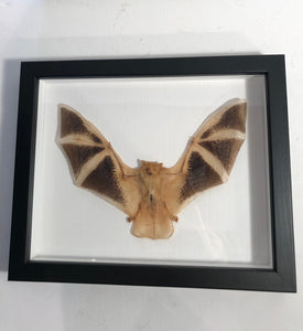 Painted Bat - Framed