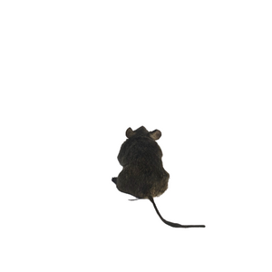 Baby Mouse Taxidermy