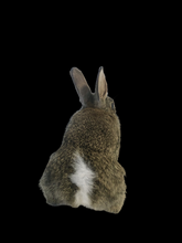 Load image into Gallery viewer, Baby Rabbit Taxidermy