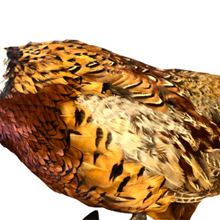 Load image into Gallery viewer, Taxidermy Male Pheasant