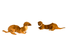 Load image into Gallery viewer, Taxidermy Weasels - Pair