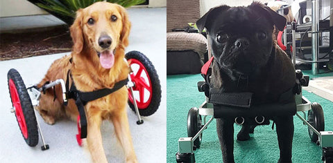 big dog wheelchair small dog wheelchair