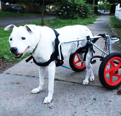 dog wheelchair for back legs