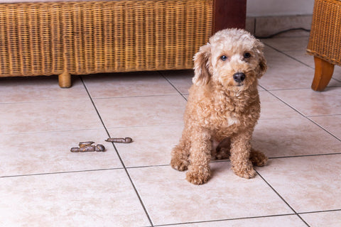 signs of separation anxiety in dogs