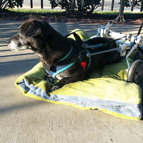 SitGo Dog Wheelchair