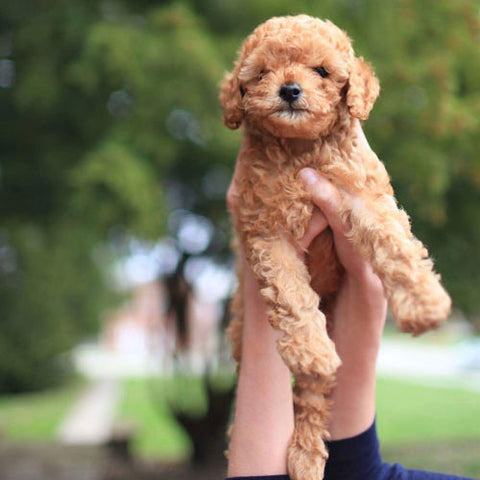 how to prevent parvo in puppies