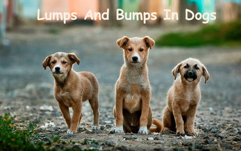 lumps and bumps in dogs