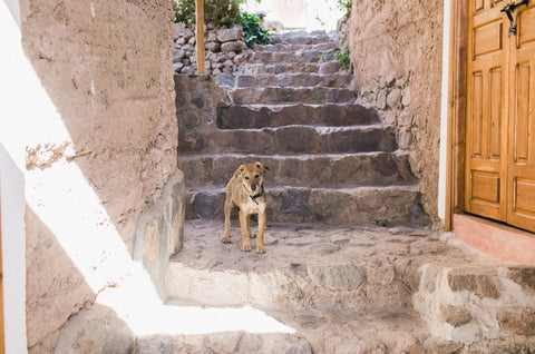 why won't my dog use stairs