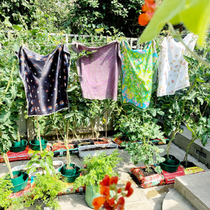 Washing line in garden with four scarves above tomato plants