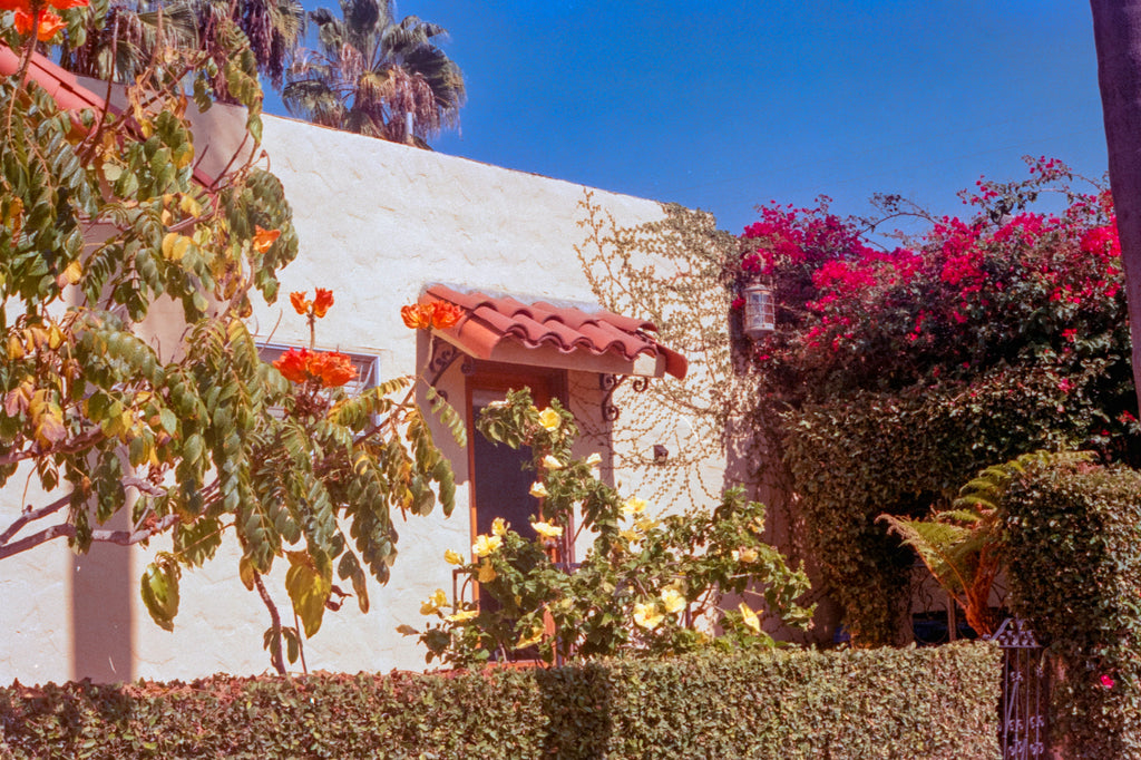 Field Notes from San Diego - Bougainvillea and Stucco