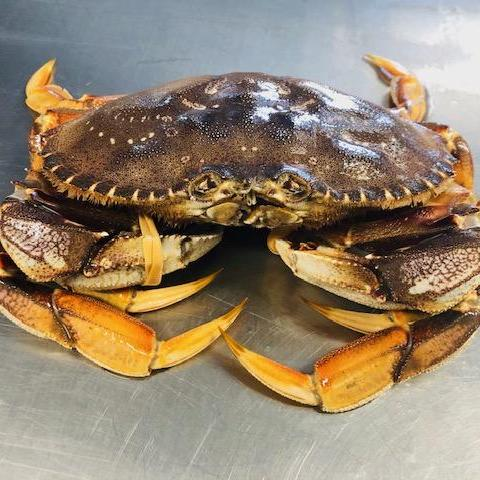 Live Dungeness Crab- STORE PICK UP ONLY - Simply West Coast