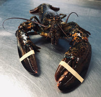 Live East Coast Lobster  ($17.50/lb)  - STORE PICK UP ONLY - Simply West Coast