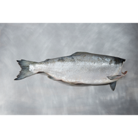 Wild Sockeye Salmon H&G (10lb box) - Simply West Coast