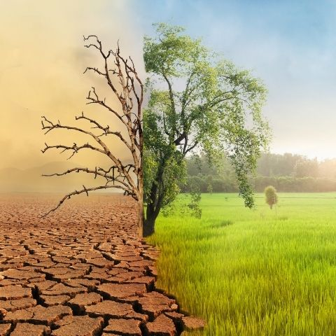climate impact environment