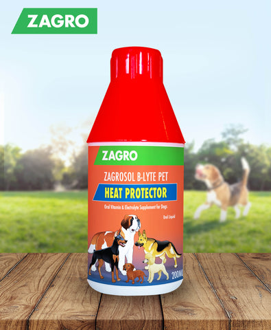 Zagrosol B-lyte Pet (Oral Vitamin & Electrolyte Supplement) 200mL