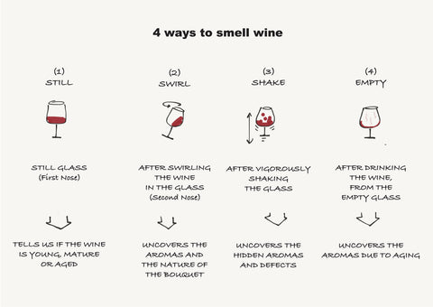 TasterPlace 4 ways to smell wine