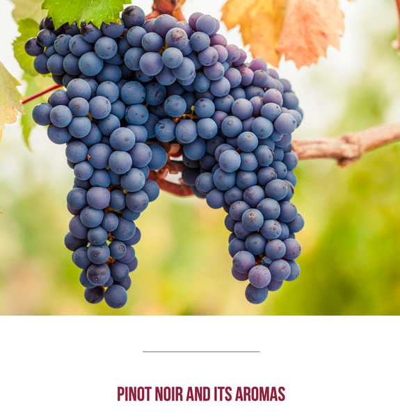 TasterPlace Pinot Noir and its aromas
