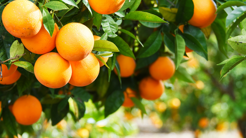 diffuse orange essential oil to add energy and health to your space