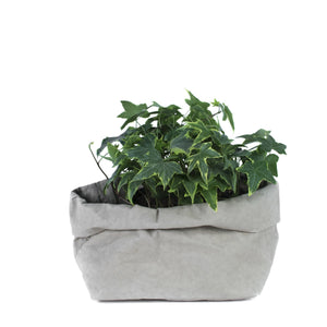 * PAPER BAG LARGE (vegetale) - wholesale