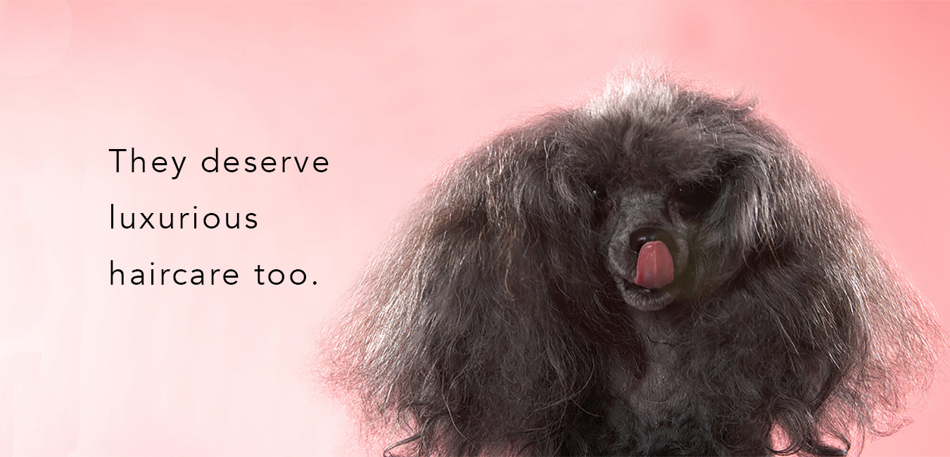 luxurious dog shampoo