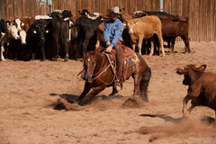 Brad Barkemeyer Cutting horses