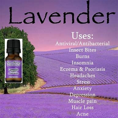 Love Me Some Lavender