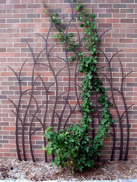 Trellis Ideas for Your Beautiful Garden