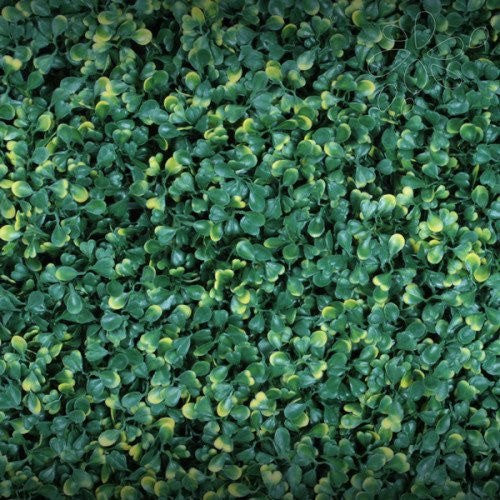 Greensmart Decor Boxwood Ficus Gold - Artificial Wall Panels
