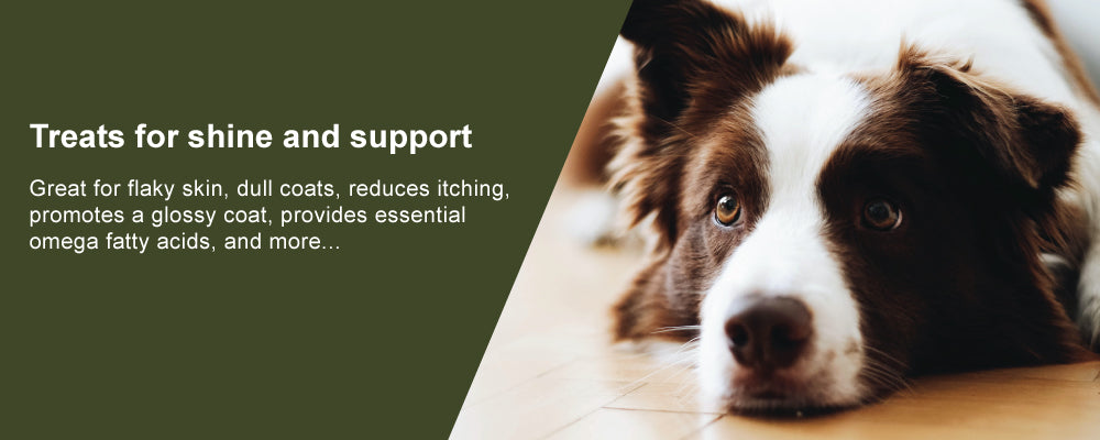 Treats for shine and support with a dog
