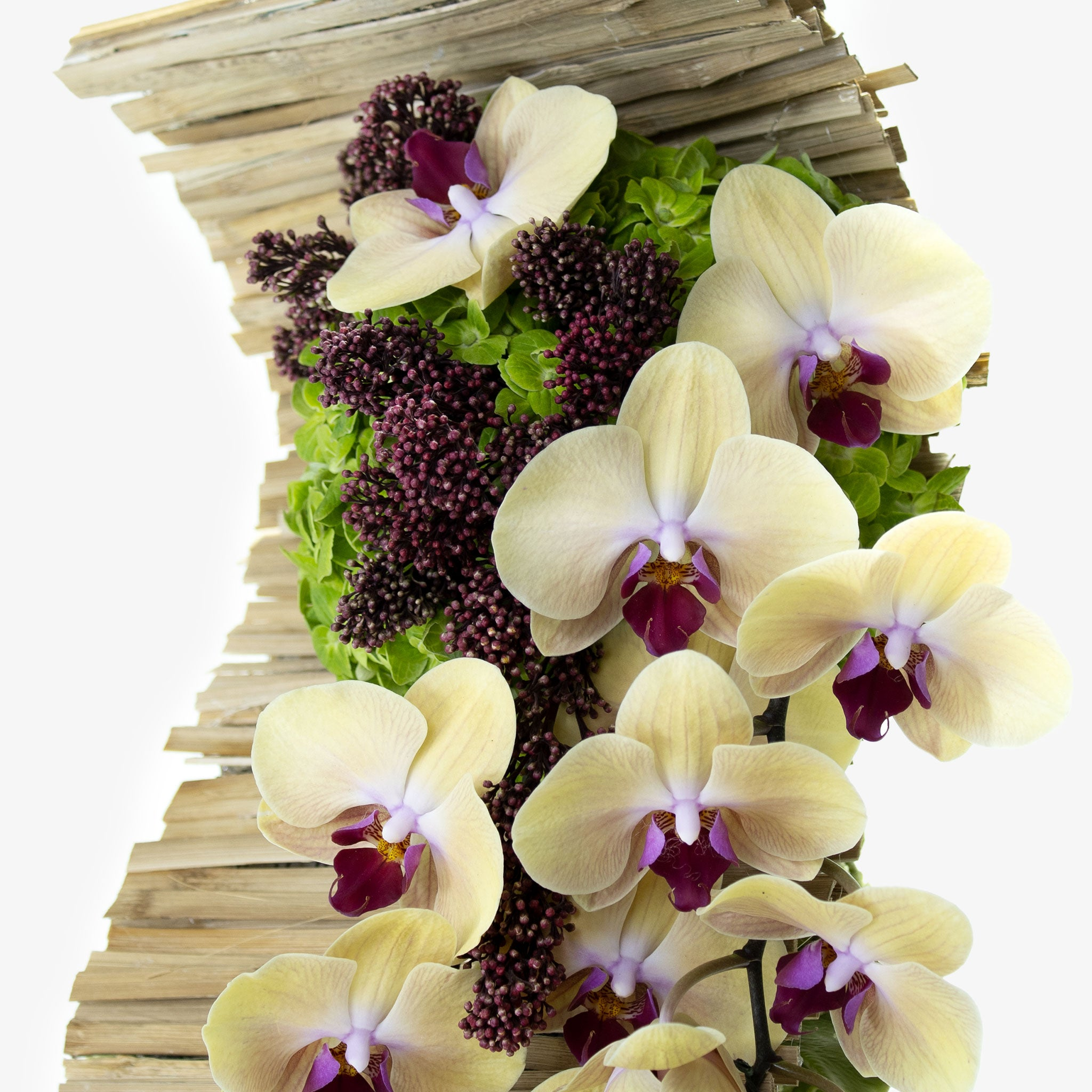 Bamboo and Orchid - Wudflowers