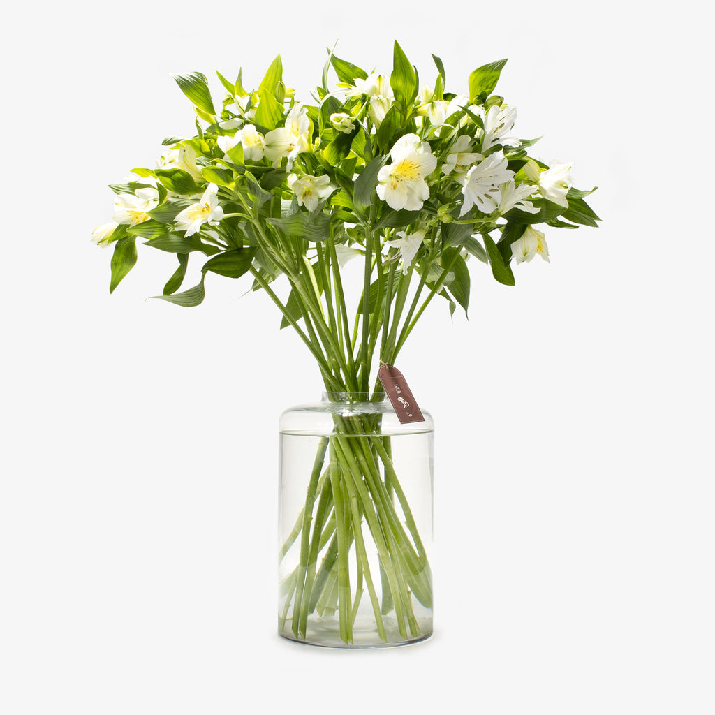 Alstroemeria White - Wudflowers