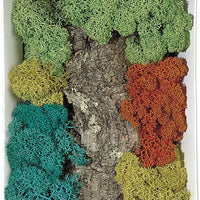 Busch 7101 -  Reindeer Moss - 4 colours - With Decorative Cork