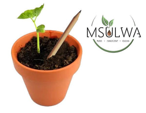 Seeded Pencil with Seed Paper - Msulwa Onine Store. Pure, Innocent, Clean. Products that are Eco-friendly, organic, sustainable, healthy, natural, vegan, biodgradable, zero waste, eco packaging. South Africa & Worldwide
