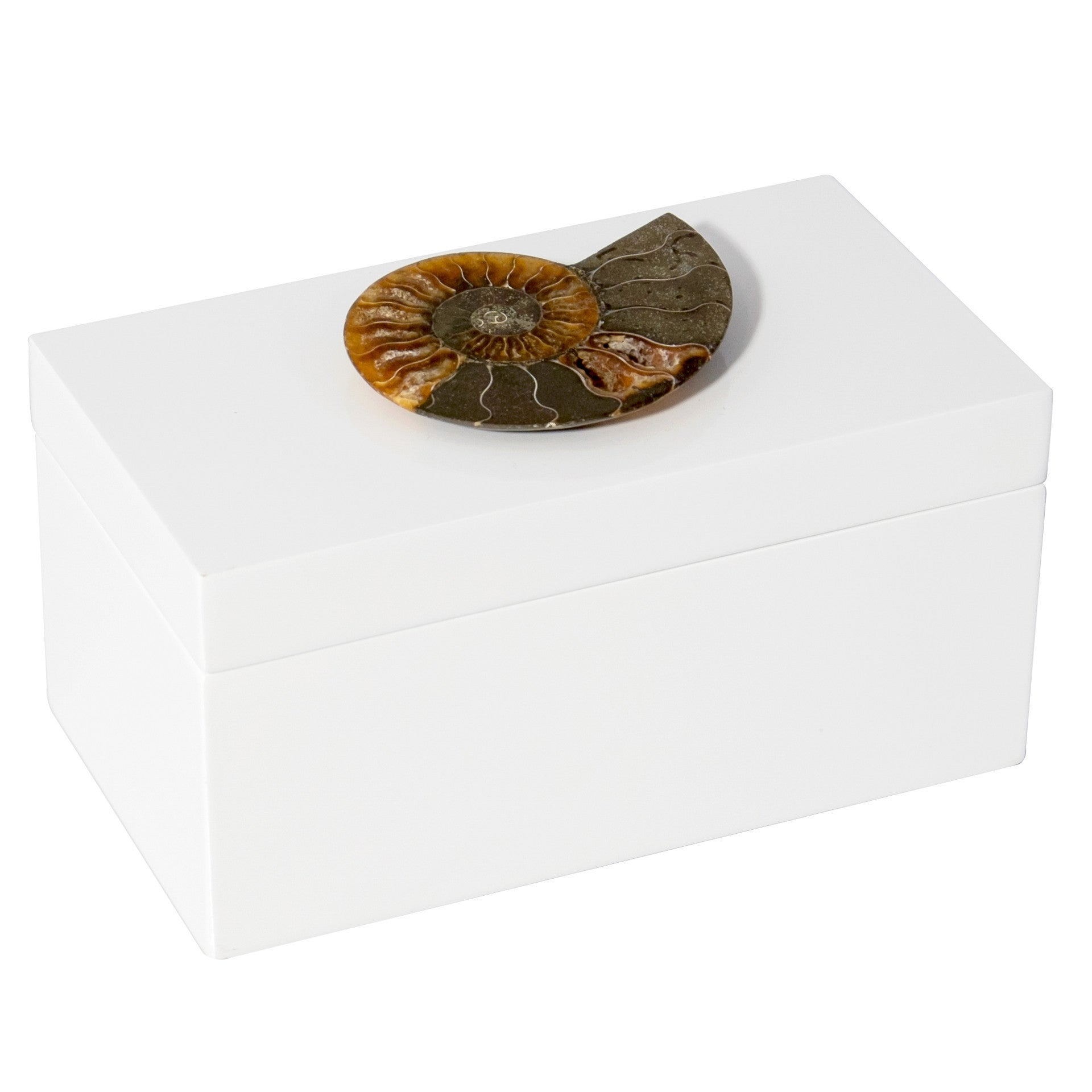 Large White Lacquer Box with Ammonite