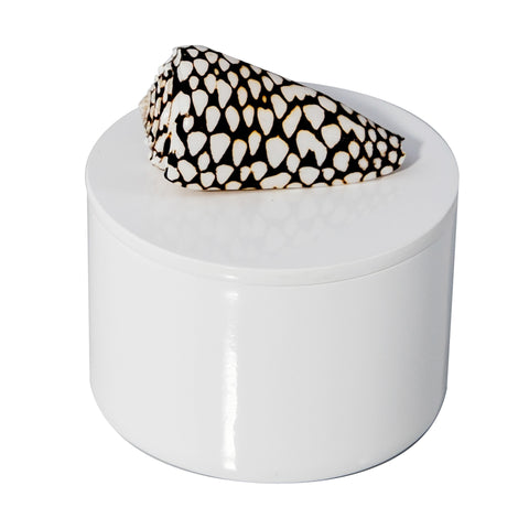 Round White Lacquer Box with Marble Cone Shell