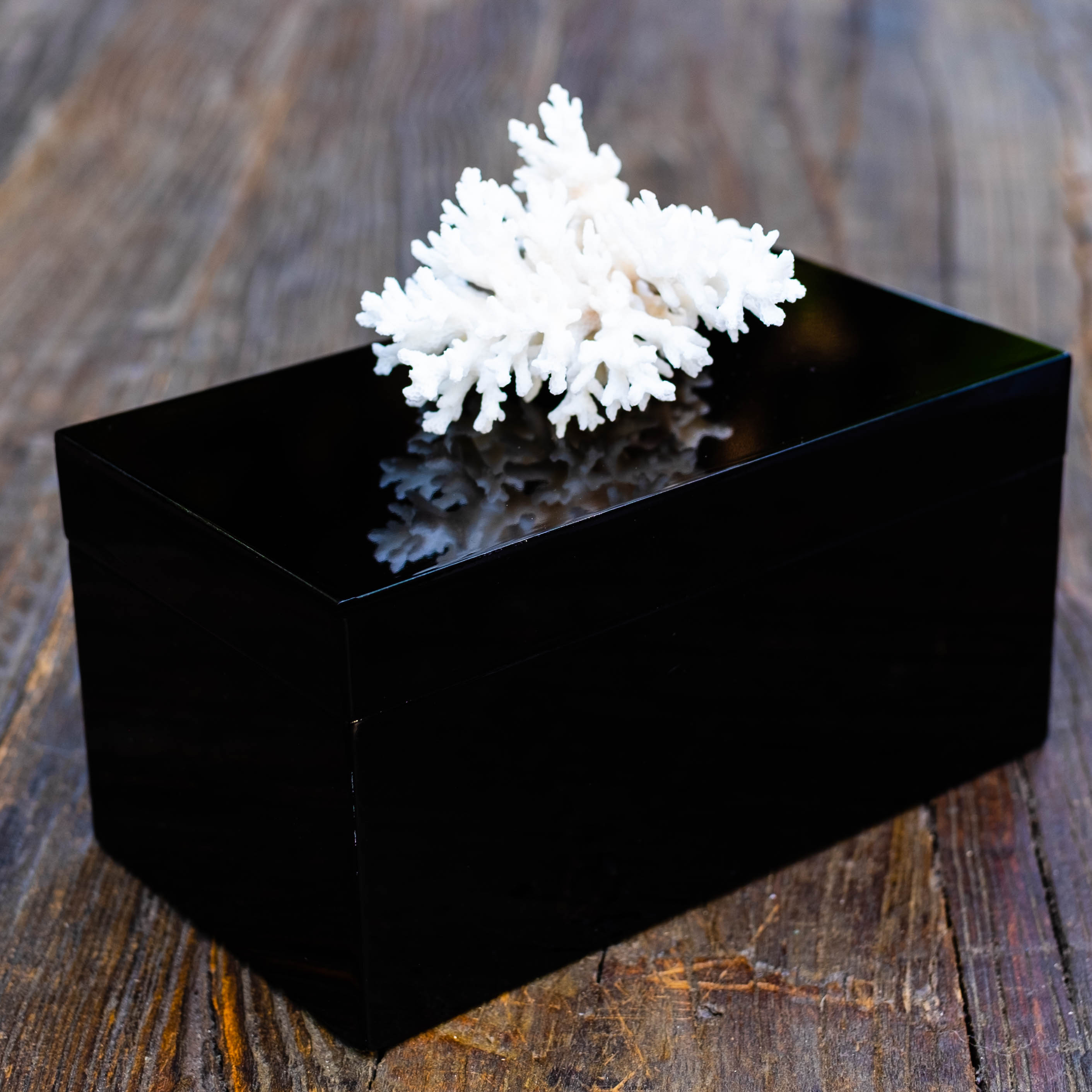 Large Black Lacquer Box with Coral Branch