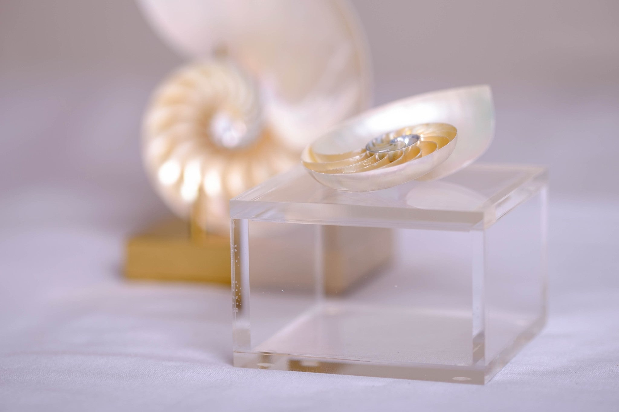 Lucite jewelry box with a gorgeous nautilus shell.