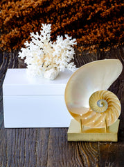 Mother of Pearl Nautilus decor accents by Mapleton Drive