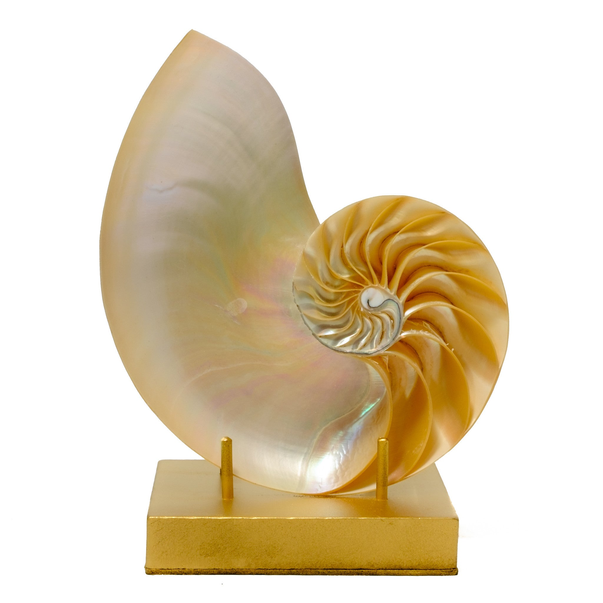 Pearl Nautilus on a Gold Stand home accents by Mapleton Drive